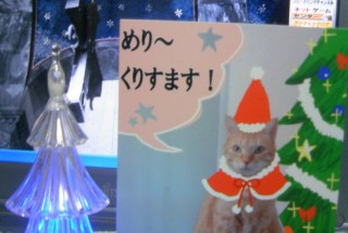 メリー クリスマス!!