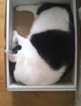 箱入り猫 にゃんにゃん日記その155