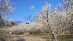 春だっちゃねぇ~!(ここはラムちゃん風に言う)