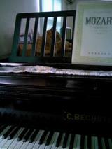 オリの中のトラはモーツァルトがお好き?