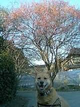 パル! 春が来たよ!!