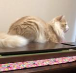 ママのピアノが大好きニャン♪